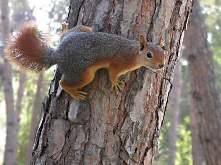 Squirrel-on-tree