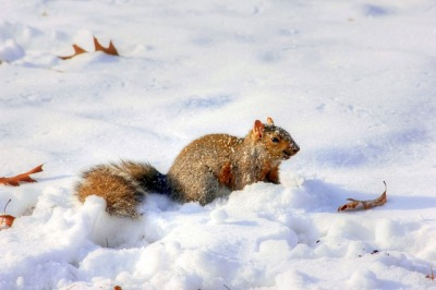 Squirrel in the Snow ©Pixaby