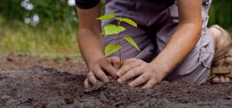tree-planting.by-hand