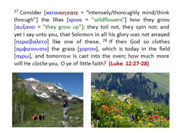 luke12-27-28-philology-slide