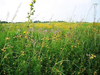 grass-field-with-wildflowers-prairie