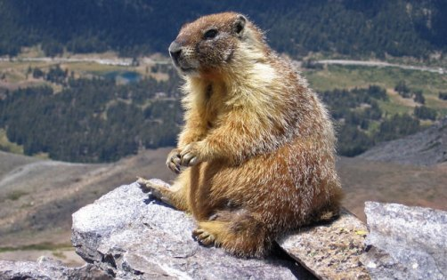 marmot-colorado-on-rocks