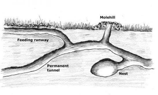 molehill-diagram-showing-underground