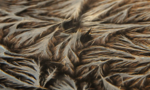 SeaOtter-fur.magnified-view.png