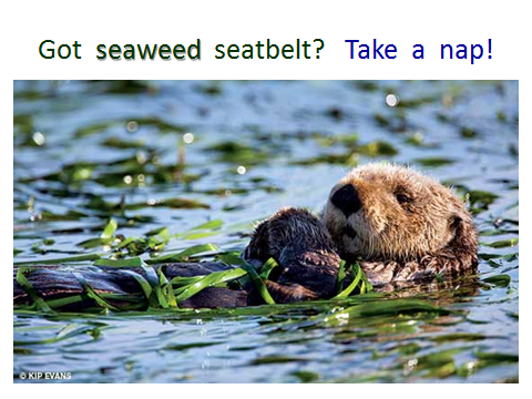 SeaOtter-seaweed-seatbelt.png