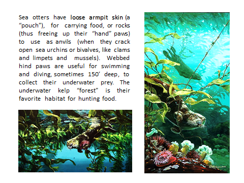 SeaOtters-in-underwater-kelp-forest.png