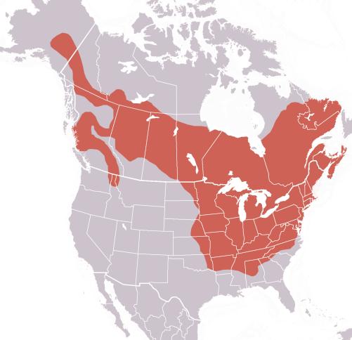 Woodchuck.RangeMap-Wikipedia.png