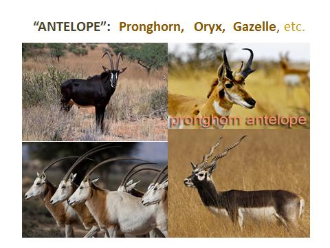 antelope-family.jjsj-PPTslide