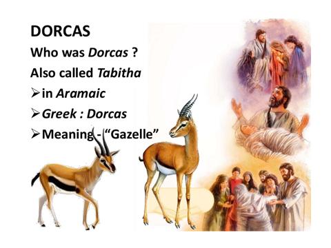 Dorcas-philology.jjsj-PPTslide