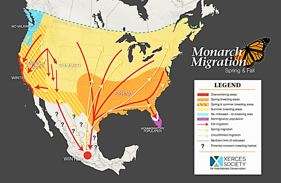 MonarchButterfly-migration-map.XercesSociety