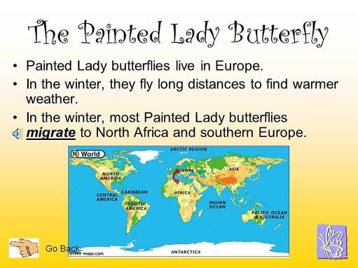 PaintedLadyButterfly-migration.MelindaFrydenlund