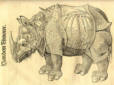 Gessner-Rhino.drawing