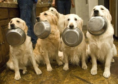 dogs-with-food-bowls