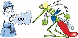 mosquito-CO2-cartoon