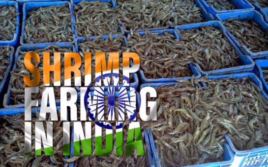 The Aquaculturists: 20/10/2017: Shrimp farming in India